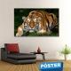 Poster Tigre con Protector en Brillo